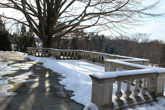 What 39 s in bloom january for 10 overlook terrace