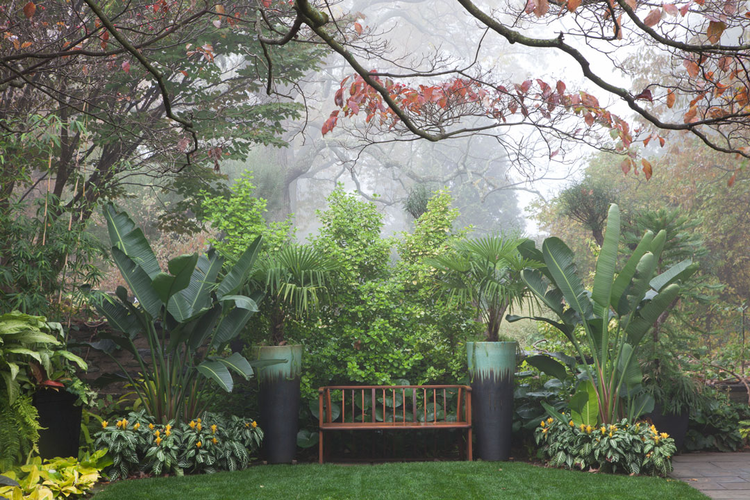 Dois <em> Trachycarpus fortunei </ em>, OU Moinho Palms, flanco los hum hum banco Pátio Menor Perto do Jardim de Entrada.  <h6> Photo by Lisa Roper </ h6>