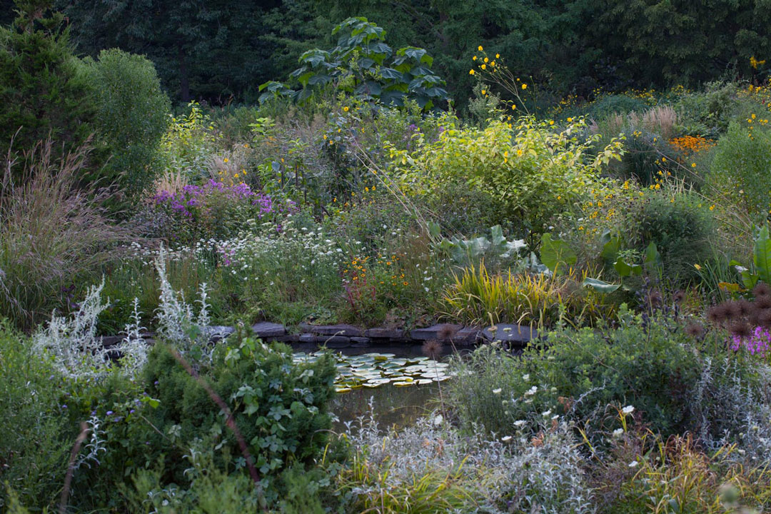 What 39 s in bloom august 21 2015 for August garden designs